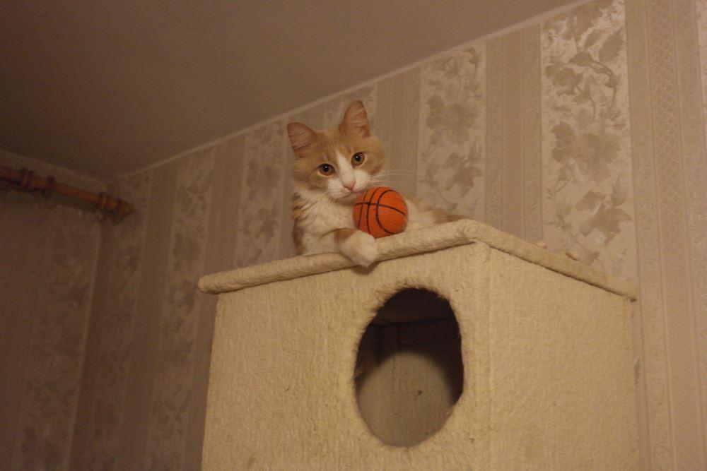 Dom kota4