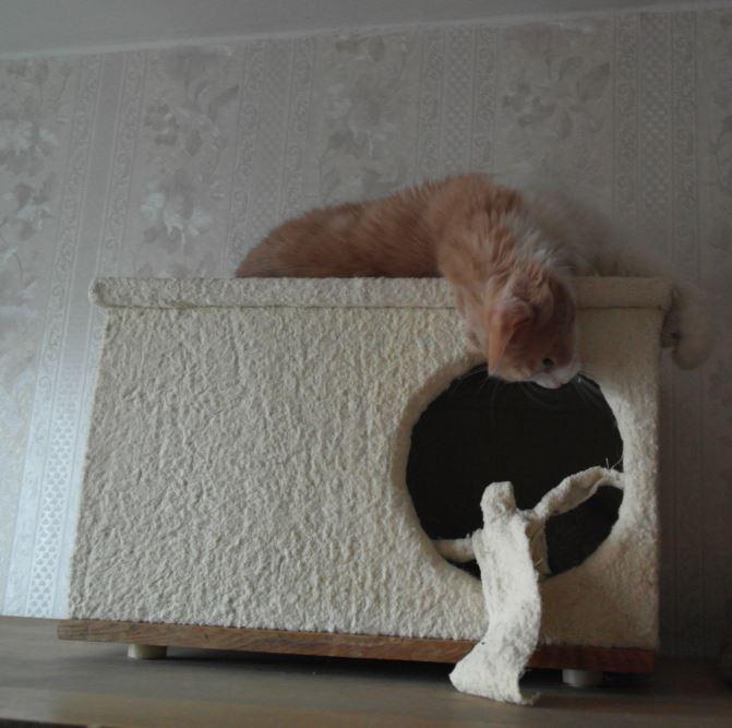 domik kota