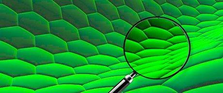 large.green2.jpg.073e311cf6285d7c0ba7926